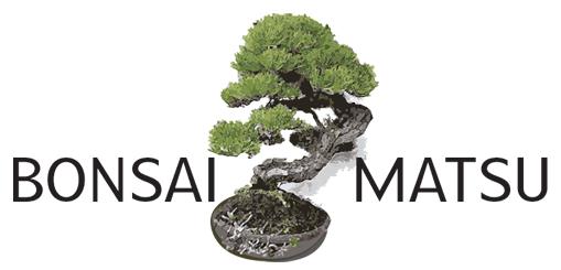 Bonsai Matsu